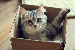 котик в коробке