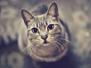 красивые глазки котика