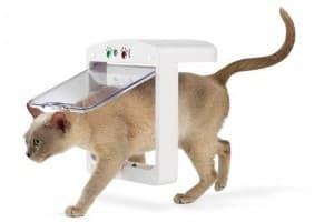 Дверь для кошки: делаем правильный выбор