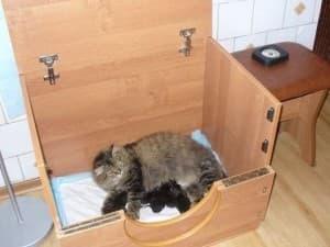 домик для родов