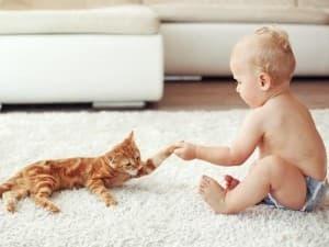 малыш играется с котиком