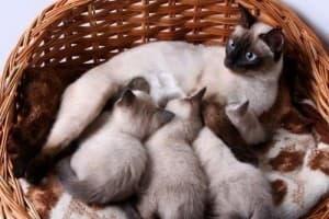 мама и ее котята