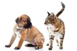 котик и собачка