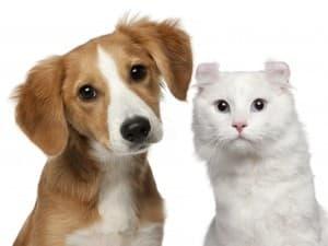 котейка и собачка