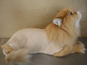 подстриженный котейка