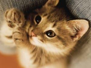 миленький котенок