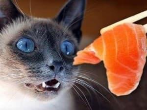 кормление котика