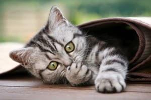 укрылся котик