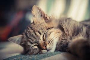 спящий котик