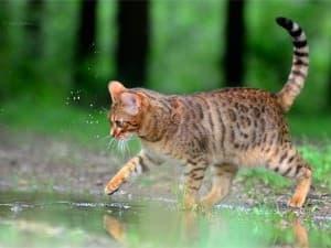 изумительный котик