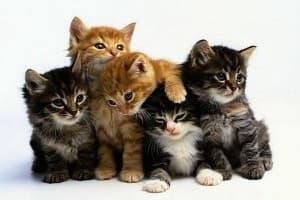пять котят