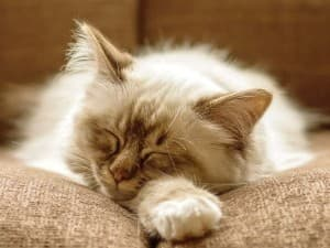 маленький котёнок спит