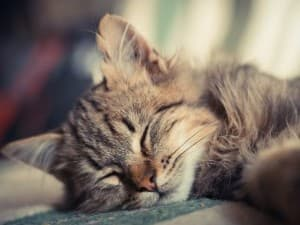 миленький котёнок