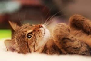 передержка кошек