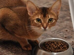 котик кушает из миски