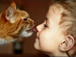 котенок ласкается с малышом