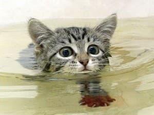 котик плывёт