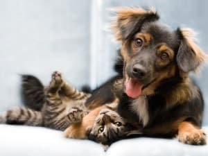 милые собачка и котик