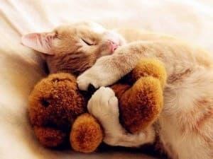 котик спит с игрушкой