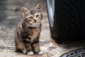 Взяли котенка с улицы. Что делать?