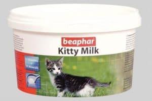 Кошачье молоко, молозиво и заменители