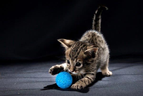 Котик играется с мячом
