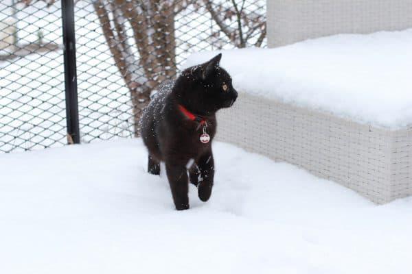 Мерзнут ли кошки зимой читайте статью
