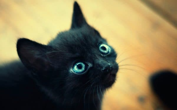 Как назвать черного котенка девочку