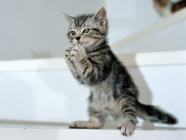 Как назвать серого котенка мальчика читайте статью