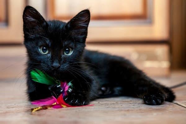 Кличка для маленьких котов
