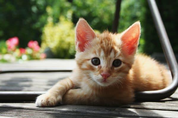 Рыженький котенок