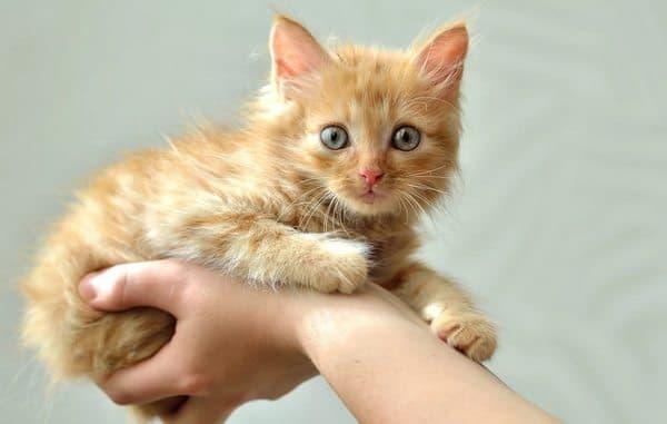 Рыжий удивительный котенок