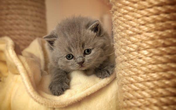 Серый малыш