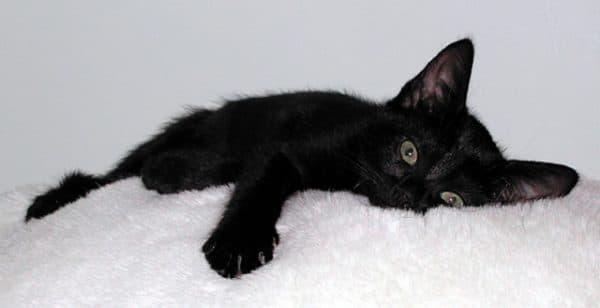 Забавные имена для черной кошечки