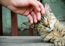 Болезни кошек передающиеся человеку