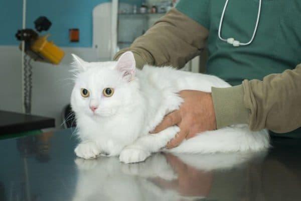 Болезни почек у кошек и котов - что нужно знать читайте статью