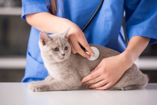 Болезни почек у котиков