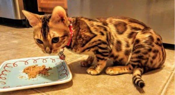 Чем кормить бенгальскую кошку