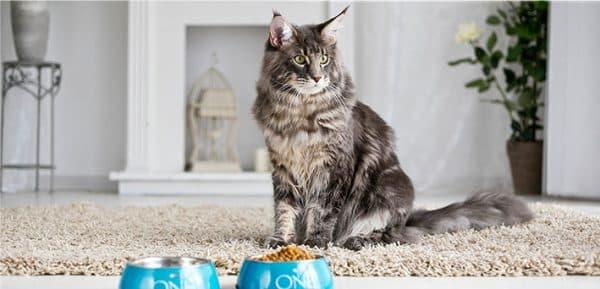 Чем кормить кота при мочекаменной болезни. Советует ветеринар