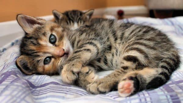 Камни в почках у кота