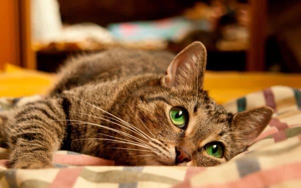 Камни в почках у котов