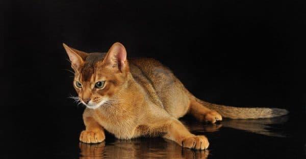Кормление кошек в период беременности