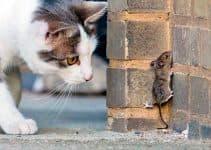 Кошка ест мышей, что делать