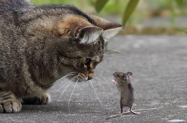 Кошка ест мышей, что делать читайте статью