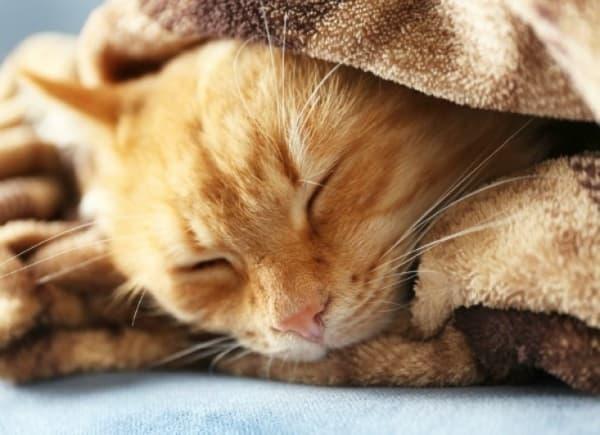 Лечение кошачьего гриппа