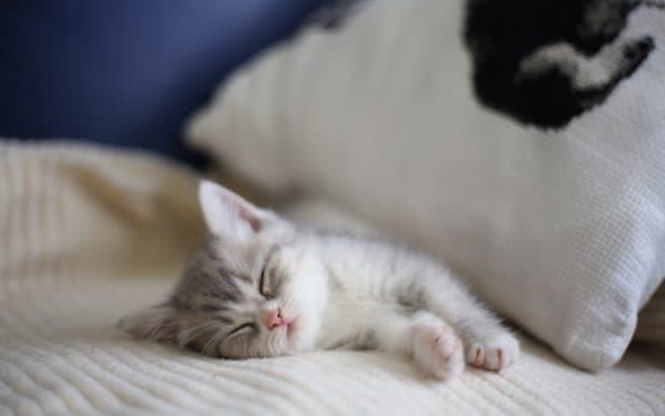 Поликистоз почек у котов