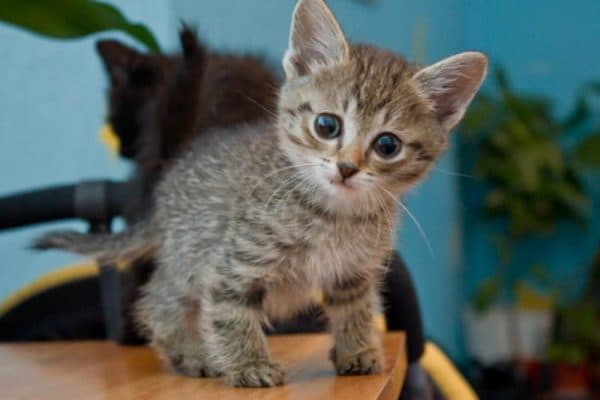 Рахит у котят. Предупреждение и лечение болезни читайте статью