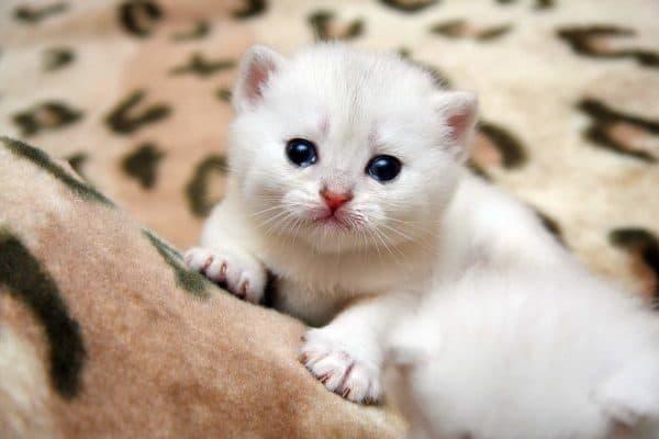 Рахит у котят. В каком возрасте проявляется болезнь