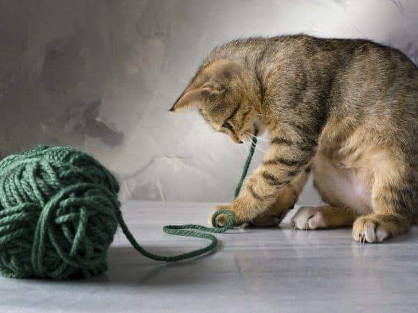 Рахит у котят. Восстановление кальция
