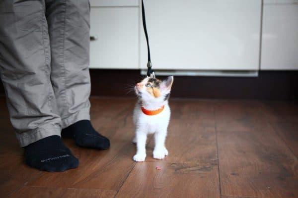 Дрессировка кошек читайте статью